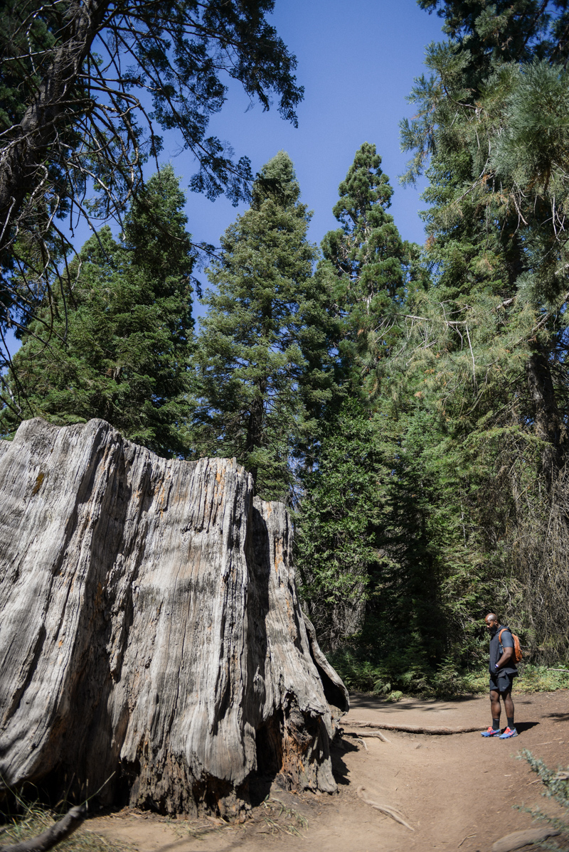 Kings Canyon National Park - Big Stump Trail