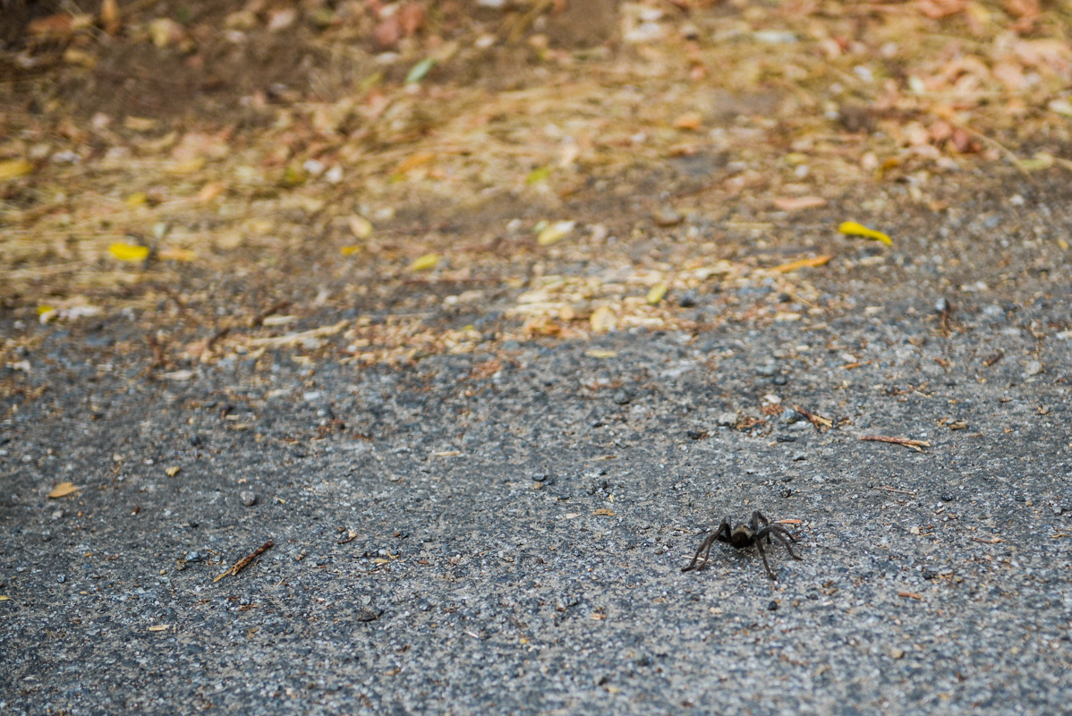 Spider spotted at Sequoia National Park