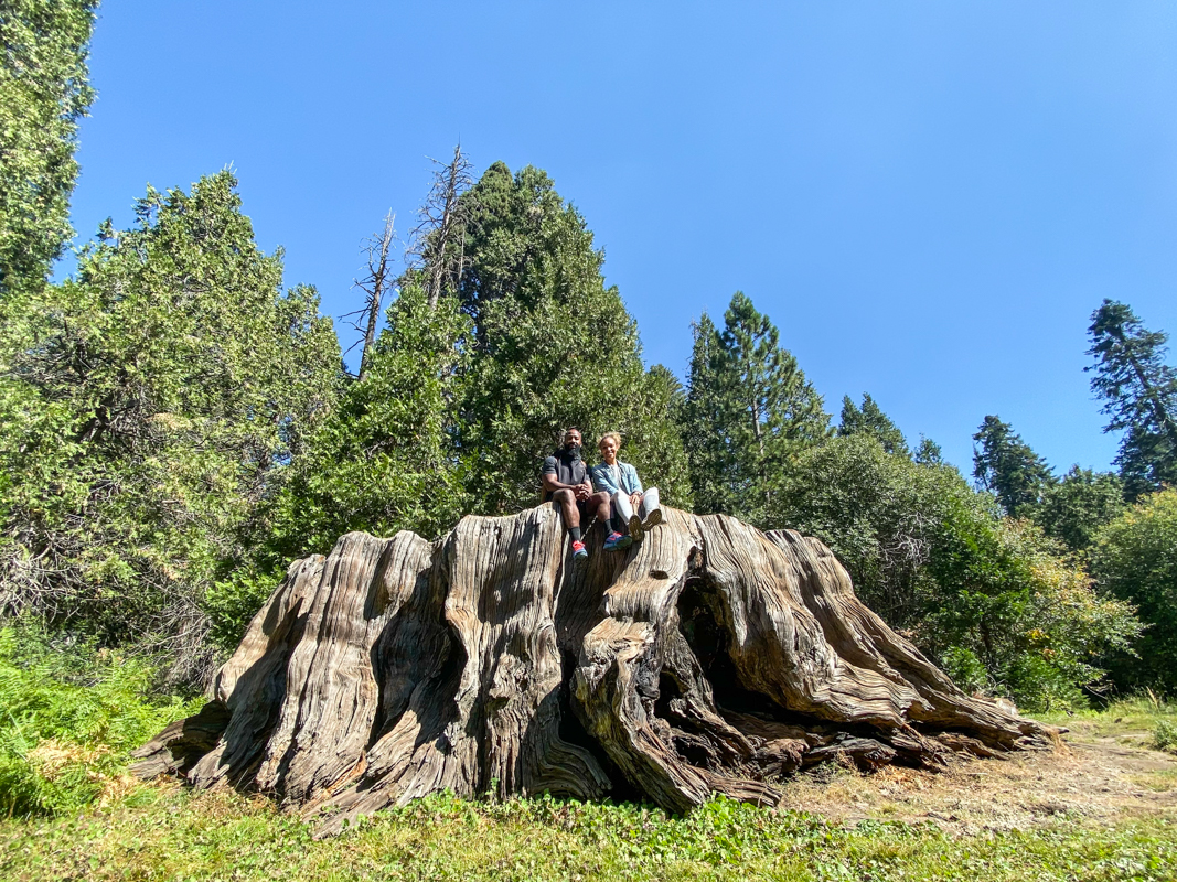 Mark Twain Stump, Kings Canyon National Park