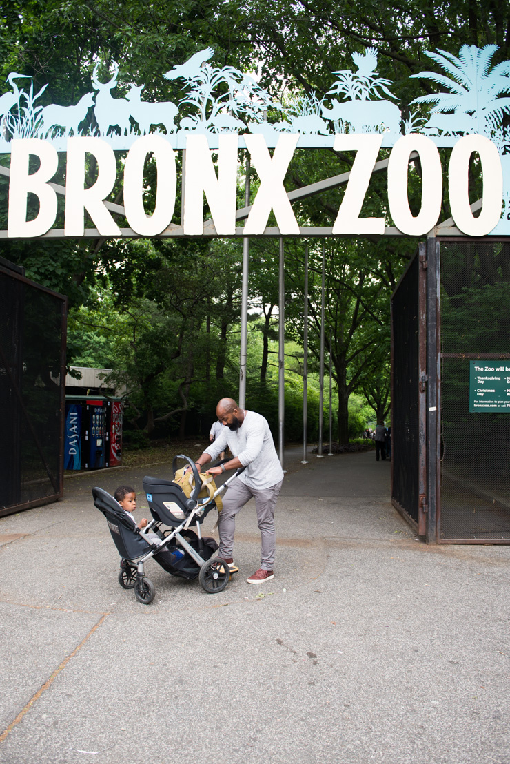 Visiting The Bronx Zoo Storied And Styled